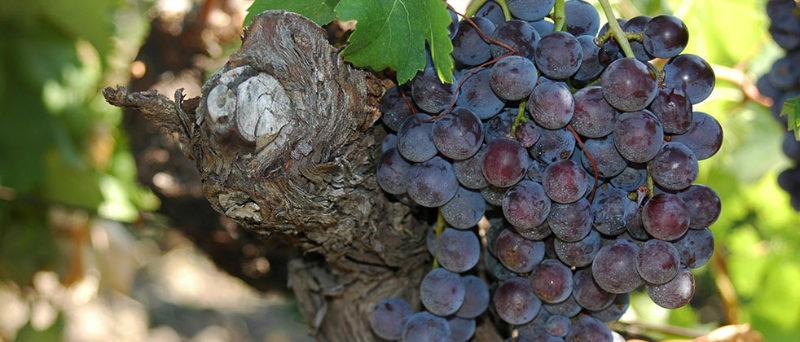 Sicily wine - Sicily Excursions